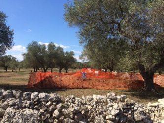 200 ελαιόδεντρα αντιστέκονται στον ΤΑΡ